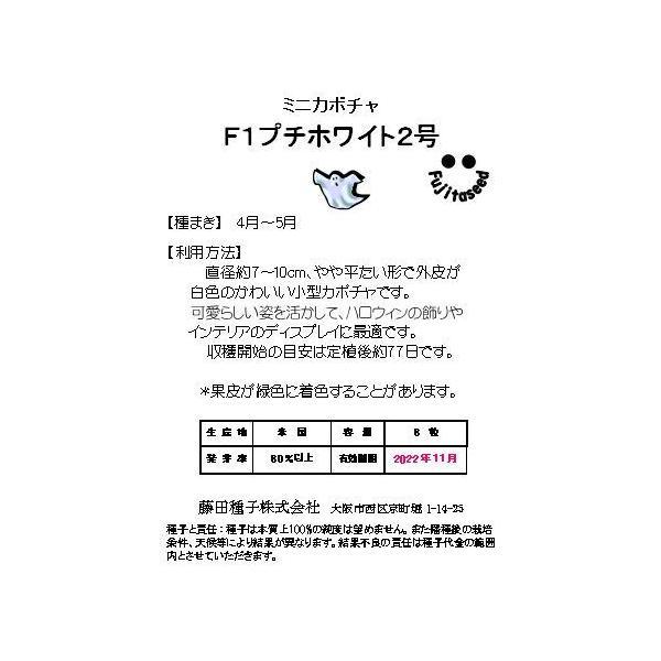 野菜 タネ 種 ミニカボチャ F1 プチホワイト2号 藤田種子|fujitaseed|02