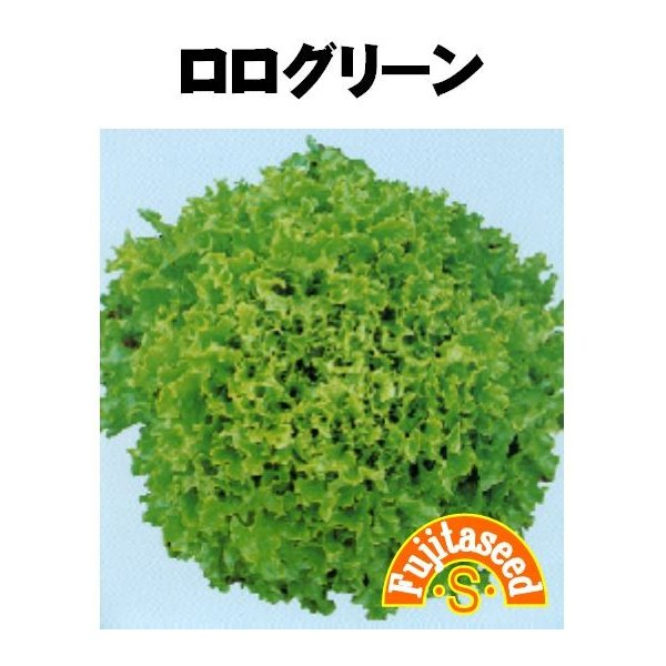 野菜 タネ 種 レタス ロログリーン 藤田種子|fujitaseed