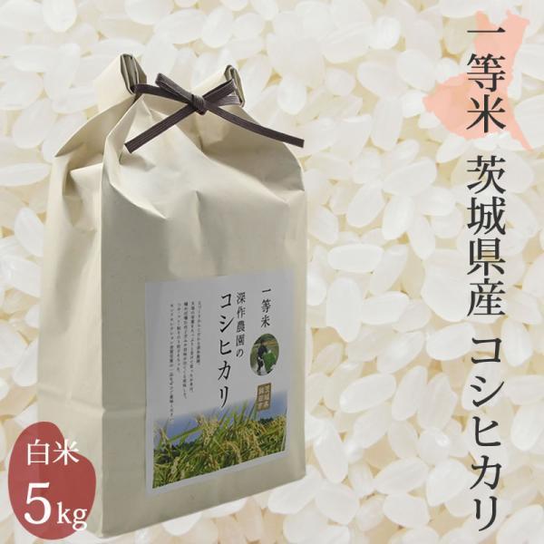 米 お米 白米 2020 コシヒカリ 5kg 5キロ こしひかり