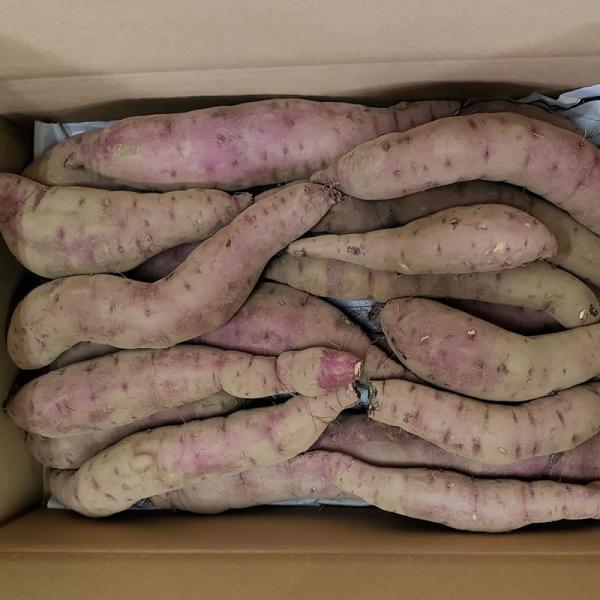 さつまいも 蜜芋 5kg 紅はるか 訳あり ワケあり B品 サツマイモ さつま芋 有機野菜 有機農産物 fukasakunouen 02