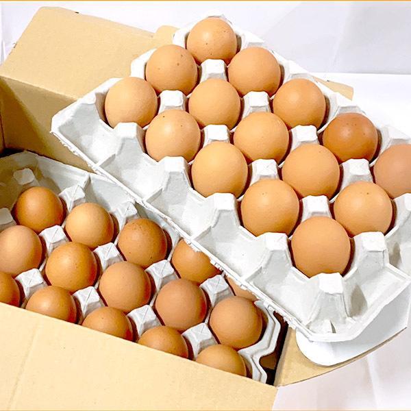 卵 たまご ケース ボリスブラウン 30個 国産