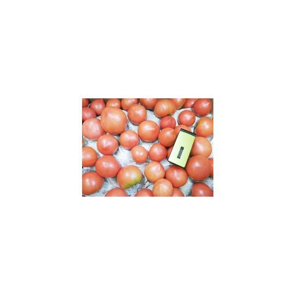 哲人秀さんのトマト(3kg)