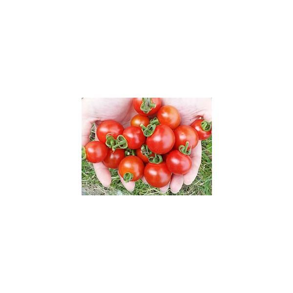 横井さんのフルーツトマト(3kg)