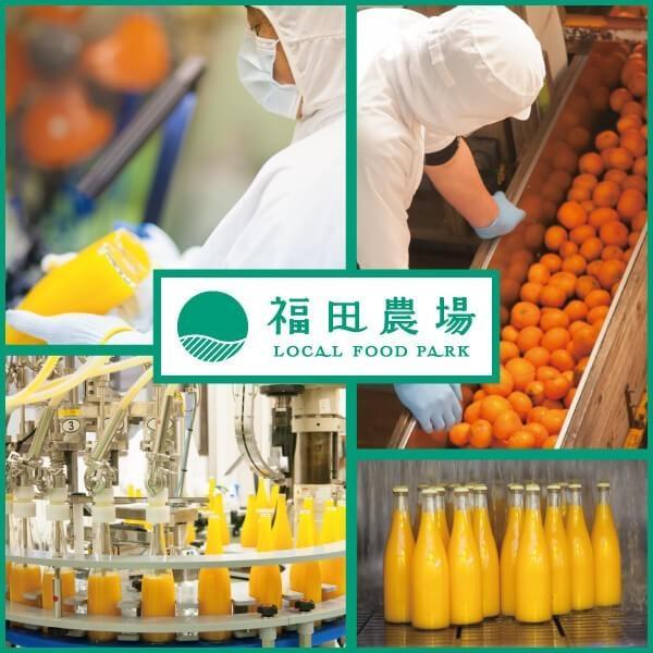 フルーツ ジュース 乳酸菌飲料 甘夏 500ml 5倍希釈 fukuda-farm 10