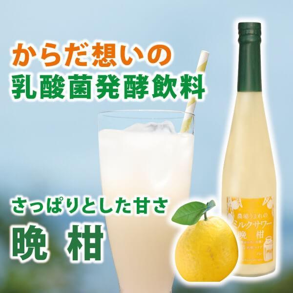 フルーツ ジュース 乳酸菌飲料 熊本晩柑 みかん 果汁入り 500ml 5倍希釈|fukuda-farm