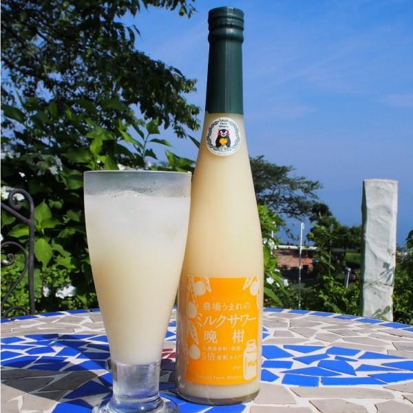 フルーツ ジュース 乳酸菌飲料 熊本晩柑 みかん 果汁入り 500ml 5倍希釈|fukuda-farm|02