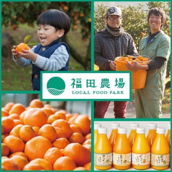 フルーツ ジュース 乳酸菌飲料 熊本晩柑 みかん 果汁入り 500ml 5倍希釈|fukuda-farm|10