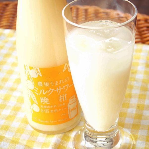 フルーツ ジュース 乳酸菌飲料 熊本晩柑 みかん 果汁入り 500ml 5倍希釈|fukuda-farm|08