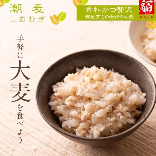 自社農園スコットランド産大麦3.5kg 潮麦 丸麦 麦ご飯 デトックス お菓子 fukui-koshino 02