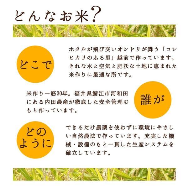 令和 令和元年度産 新米1等級 イクヒカリ 玄米30キロ|fukui-yamasho|02