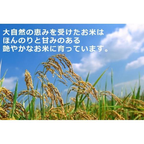 米10kg コシヒカリ10kg(5kg×2) 福井県大野産 特A 白米 29年産 送料無料|fukuikomeya|04