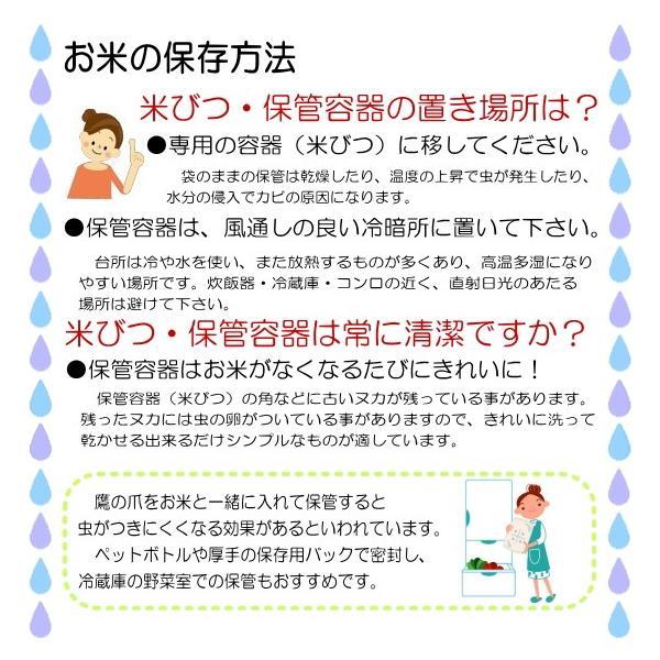 米 5kg 29年産  無洗米 福井県産 ミルキークイーン 5kg 送料無料|fukuikomeya|09