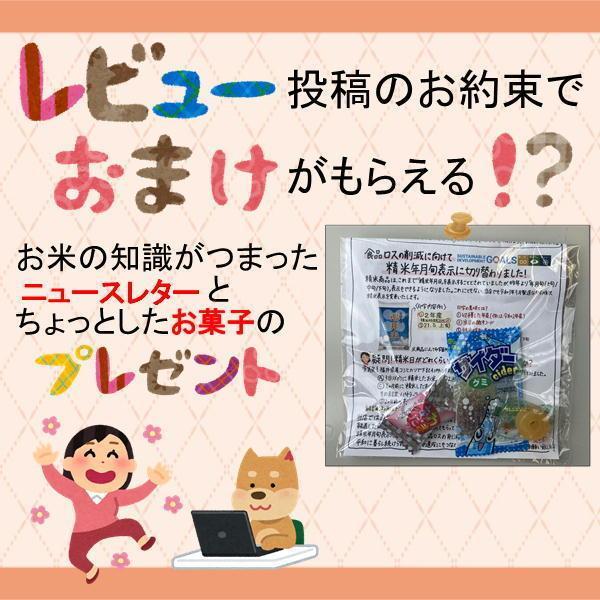 お米 10kg ひかり精米 国内産 家庭応援 白米 10kg 送料無料 一部地域を除く|fukuikomeya|07