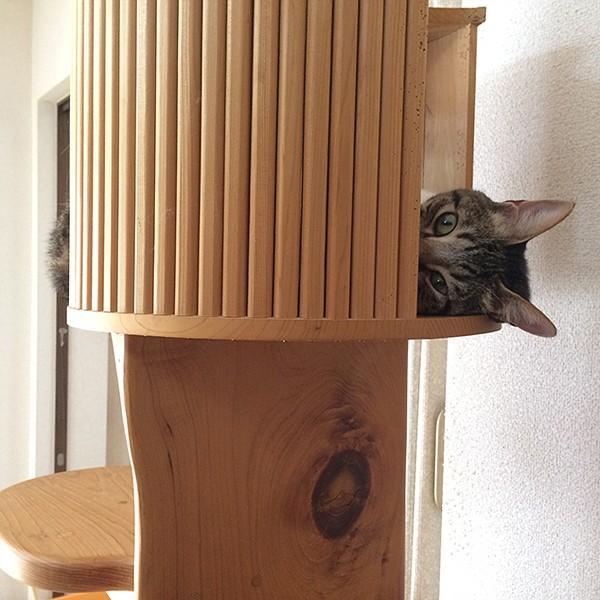 キャットツリーひぐらし 支柱1本 ハウス付きタイプ|fukunekohonpo|07