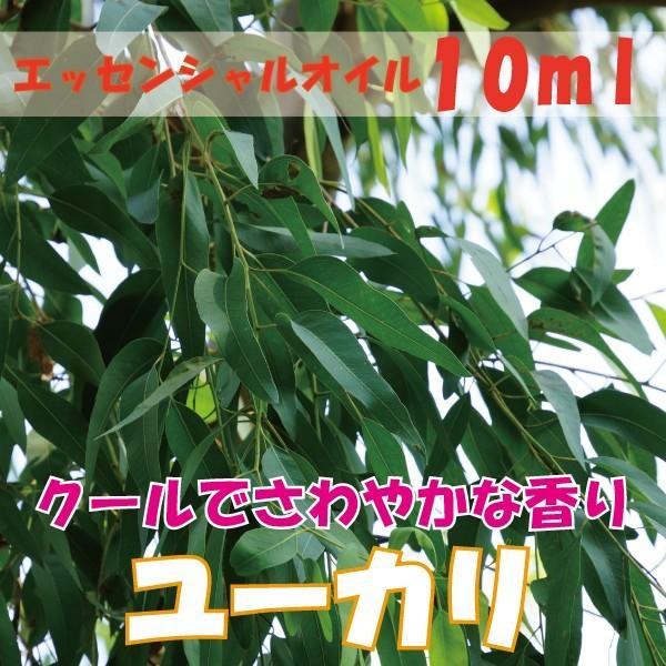 ユーカリ (10ml) エッセンシャルオイル|fukuoka-soleil-shop