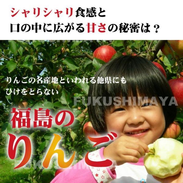 りんご 訳あり 格安 福島県産 訳アリ サンふじ リンゴ 4.5kg箱 (12〜25玉入) 2019年|fukushimasan|05