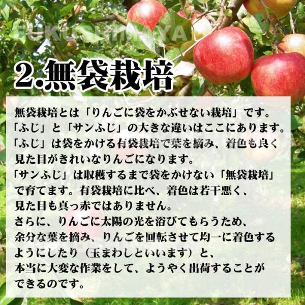 りんご 訳あり 格安 福島県産 訳アリ サンふじ リンゴ 4.5kg箱 (12〜25玉入) 2019年|fukushimasan|07