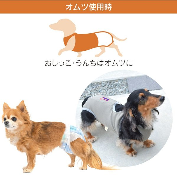 抗菌・消臭機能付男の子用マナーガード(R)(ダックス・小型犬用)【ネコポス値2】日本製 マナーパンツ マーキング 介護 おむつ シニア 老犬 お漏らし お出かけ|fullofvigor-yshop|11