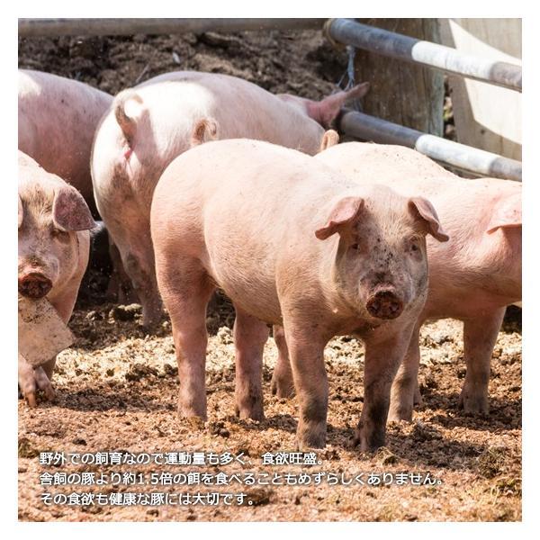 里の放牧豚 Bセット|furuyanouen|04