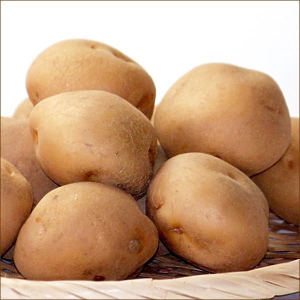 北海道 じゃがいも 訳あり キタアカリ 10kg Lサイズ 北海道産 きたあかり 新じゃがいも 馬鈴薯 秋野菜 野菜 グルメ 送料無料 お取り寄せ|g-hokkaido|03