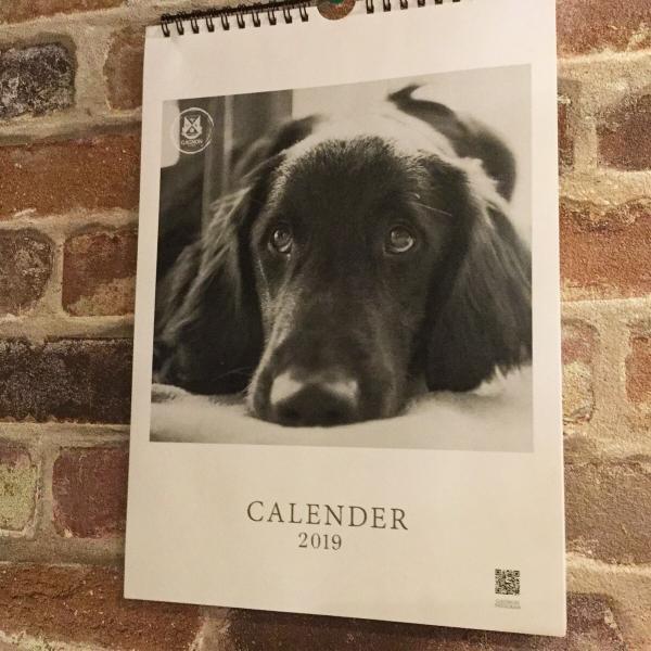 GAGNON オリジナルカレンダー2019 フラットコーテッド SAPくんカレンダー|gagnon-maple