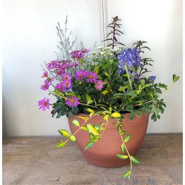 寄せ植え 秋の寄植え 夏の寄せ植え 秋の花 夏の花 ギフト 送料込 でこの価格 カジュアルポット プラ鉢寄せ植え 当店 大人気商品