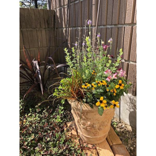 寄せ植え 秋の花 秋の寄せ植え おまかせ寄せ植え テラコッタ鉢 お誕生日 ギフトにも 旬の花材がいっぱい