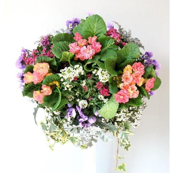 冬の花 寄せ植え 冬の寄せ植え 壁掛け寄せ植え お歳暮 お正月 ギフト お誕生日プレゼント おまかせ 季節の ハンギングバスケット