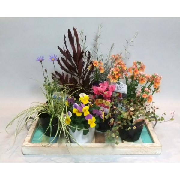 花苗  冬の花 寄せ植え あなたも プロの作品 が作れます 送料込  寄せ植え苗セット 季節 カンタン苗セット