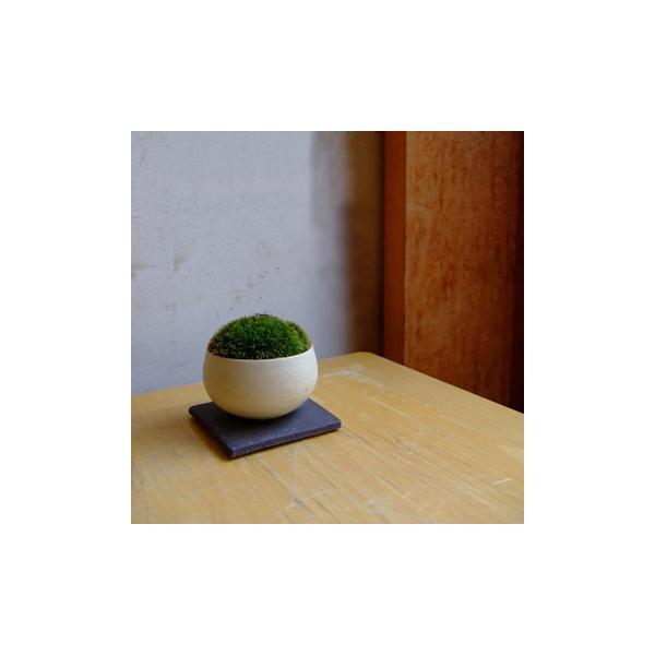 盆栽作家小林健二の景色盆栽 ヤマゴケ 丸白豆鉢