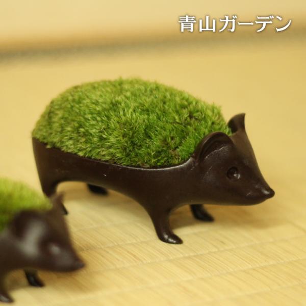 可愛すぎる!机に置ける苔12選で苔の世界に踏み込む!