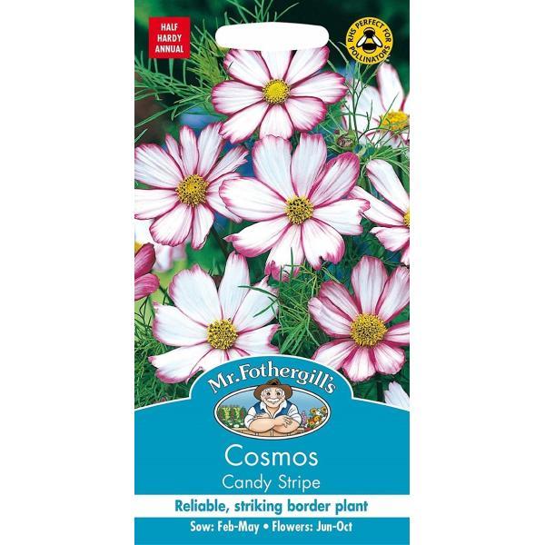 【輸入種子】 Mr.Fothergill's Seeds Cosmos Candy Stripe コスモス キャンディ・ストライプ ミスター・フォザーギルズシード