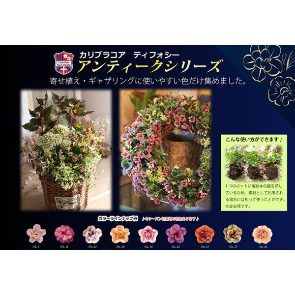 全12色 八重咲きカリブラコア アンティークシリーズ 3.5寸 6苗セット 送料無料 gekihana 06
