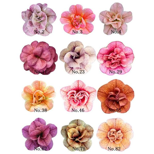 全12色 八重咲きカリブラコア アンティークシリーズ 3.5寸 6苗セット 送料無料 gekihana 07