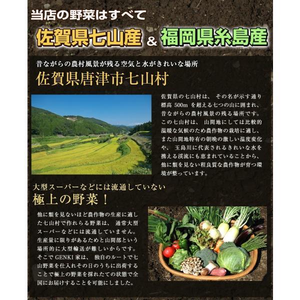 白菜1玉 佐賀七山・福岡糸島の新鮮野菜|genkiya6090|02