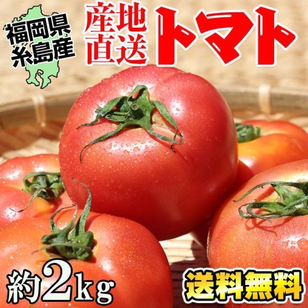 糸島トマト