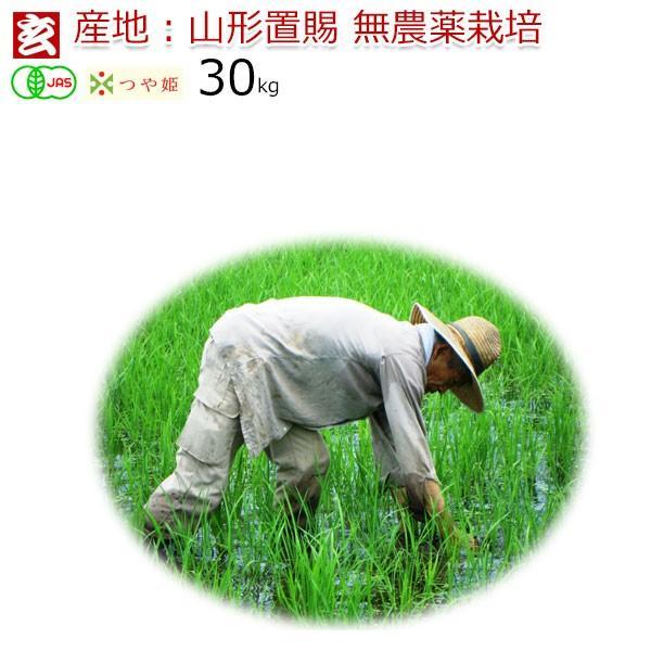 新米 無農薬玄米 30kg 送料無料 JAS有機認証 山形県産 無農薬つや姫  産年:令和3年 生産者:小林亮 ※精米選択可 ※精米選択可