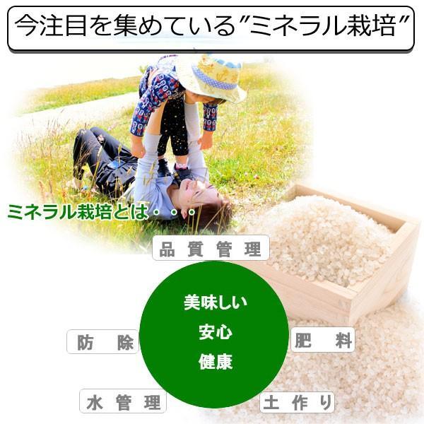 新米 10kg 送料無料 30年産 新潟県 ミネラルコシヒカリ 玄米 10kg 送料無料 ミネラル栽培米 ※精米選択可 (1285)|genmaiya-tarui|04