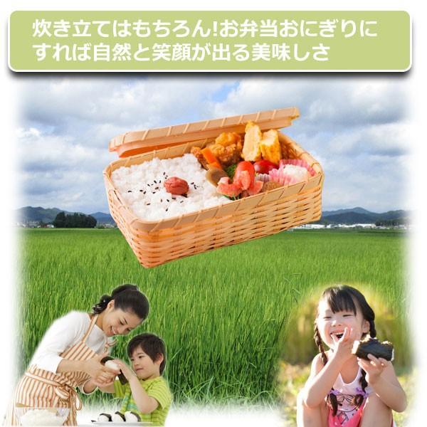 (お米 コシヒカリ 10kg 送料無料 5kg2袋)  30年産 丹波 篠山産 農薬70%減 コシカリ 10kg 送料無料 ※玄米から白米まで精米選べます (440) genmaiya-tarui 04