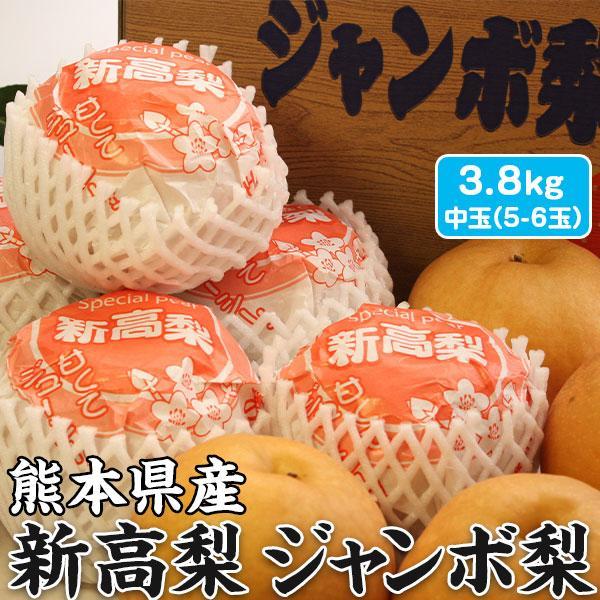 梨 新高梨 ジャンボ梨 贈答用 熊本県産 1箱 約3.8kg 中玉5-6玉入り ギフト 送料無料