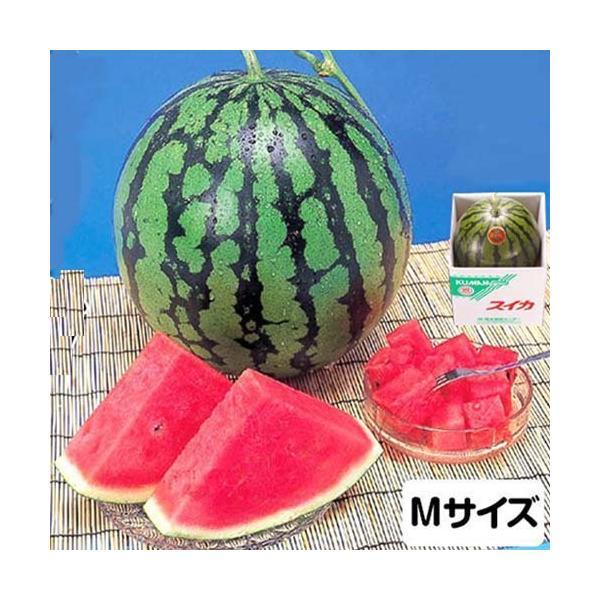 スイカ Mサイズ 4kg 熊本県産 1箱(1玉)  高級すいか/等級:秀(赤)|化粧箱入り 贈答用 ギフト・送料無料