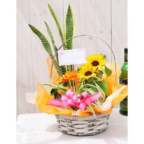 花 誕生日 フラワープレゼント 季節の寄せ植えフラワーギフト gifuryokuen-store 03