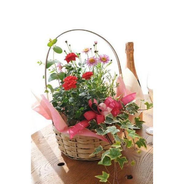 花 誕生日 フラワープレゼント 季節の寄せ植えフラワーギフト gifuryokuen-store 04