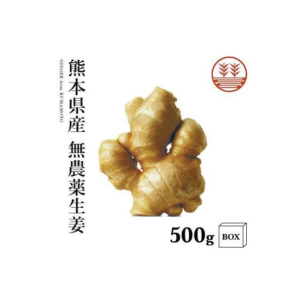 無農薬 生姜 500g +箱 熊本県産 国産 送料無料 生姜 しょうが ショウガ 根生姜 佃煮 薬味 きざみ 生姜 生姜焼き 唐揚げ