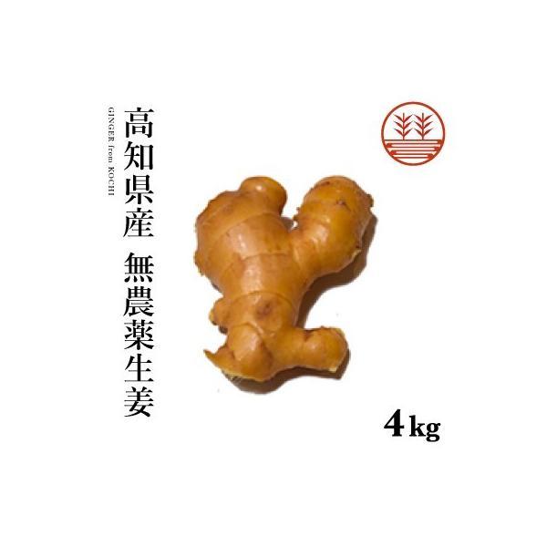 無農薬 生姜 4kg 高知県産 国産 送料無料 生姜 しょうが ショウガ 根生姜 佃煮 薬味 きざみ 生姜 生姜焼き 唐揚げ