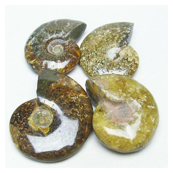 アンモナイト 化石 t653-3339