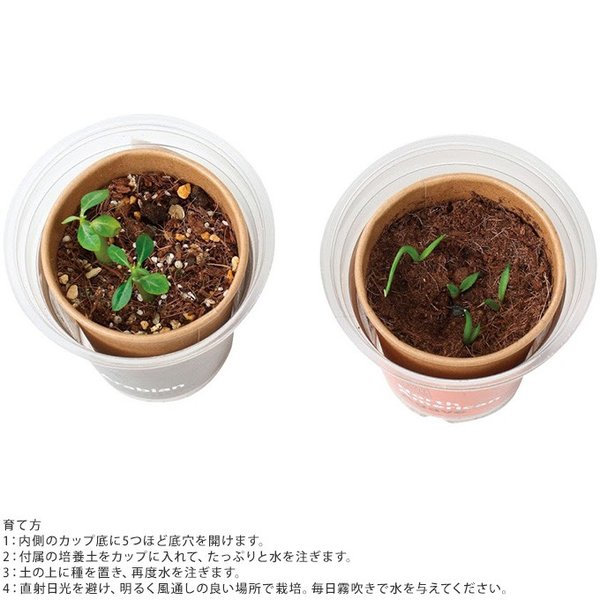栽培キット  簡単 安全 手軽 家庭 かわいい 栽培セット 世界の植物 girlyapartment 03