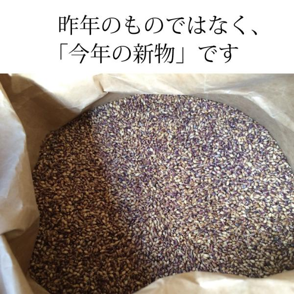 雑穀 もち麦 パック 国産 無農薬 栄養価最高峰の殻付き紫もち麦品種 セール godaihasebegift 11