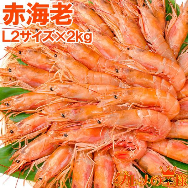 赤海老 赤えび 2kg 特大 L2 30〜60尾 業務用 1箱 赤エビ あかえび アカエビ 寿司 刺身用
