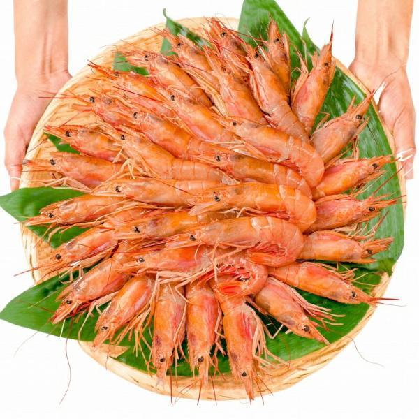 赤海老 赤えび 2kg 特大 L2 30〜60尾 業務用 1箱 赤エビ あかえび アカエビ 寿司 刺身用|gourmet-no-ousama|04